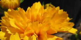 Perennial Flower Plants