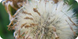 Fresh 2017 Seed Harvest