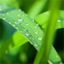 Carex Fresh Look