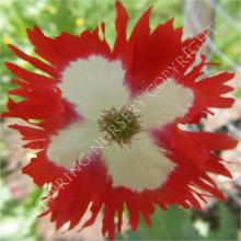 Poppy Danish Flag Seeds