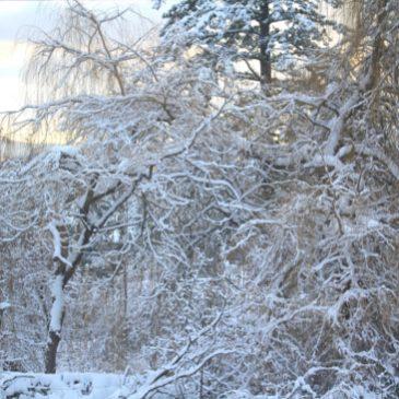 Snowy Zone 8 Winter 2017