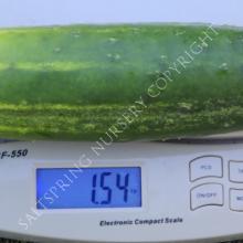 straight eight cucumber