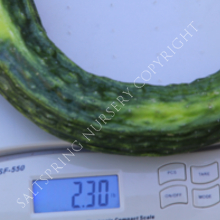 Suyo Long Heirloom Cucumber