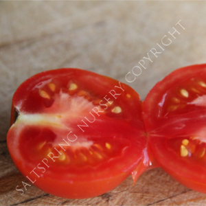 Tomato 'Lunch Bucket' Seeds