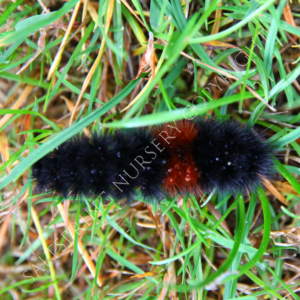 Caterpillar Winter Weather Prediction