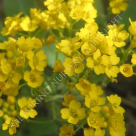 basket of gold flowers