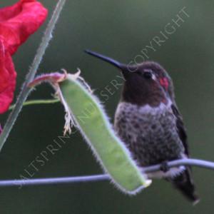 Warning: Hummingbird Feeder Hazard and How to avoid it