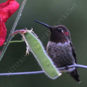 Warning: Hummingbird Feeder Hazard and How to avoid it