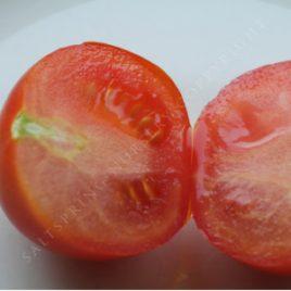 Stupice Heirloom Tomato