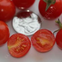 Tomato Sweety Heirloom Seeds