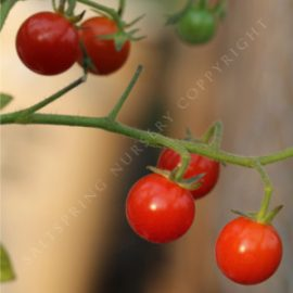 Tomato Sweety Heirloom Seeds