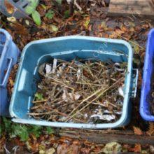 worm compost bin bedding
