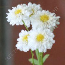 Double Feverfew Flowers
